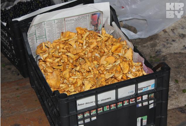 И когда они все успевают: и газету любимую прочитать, и грибов насобирать? Фото: Елена ЗУЕВА