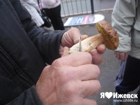 На ижевских рынках ложные опята покупают ведрами