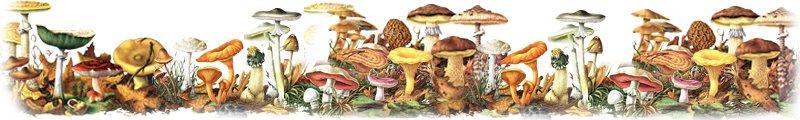 Грибные жители и кто любит лакомиться грибами