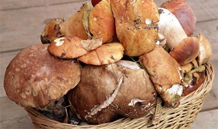 Россиянам оставили право бесплатно собирать грибы в гослесах