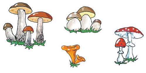Ерошка очень любит рыжие грибы лисички
