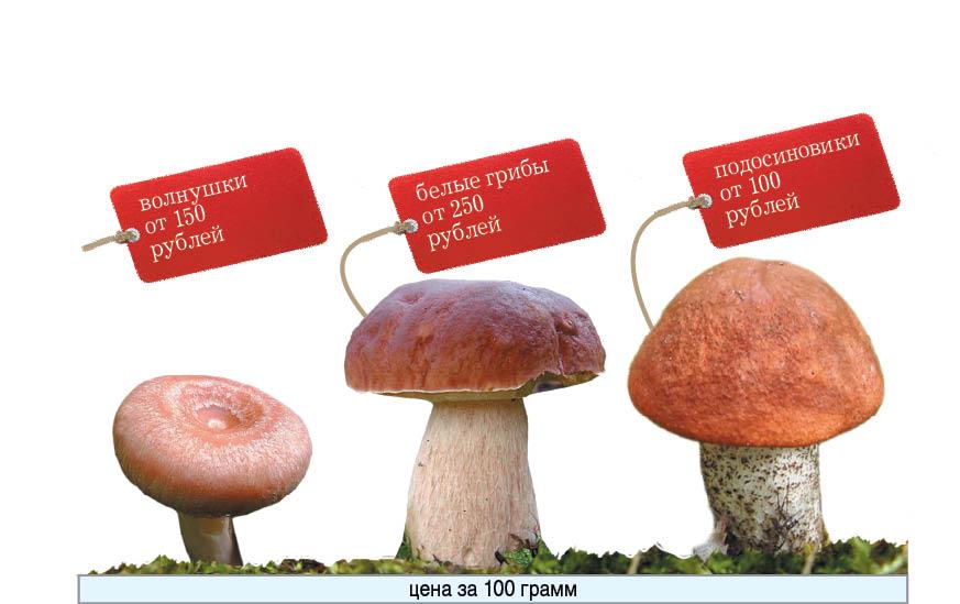 Сейчас майонезное ведерко подосиновиков обойдется любителям грибов в 100 рублей.