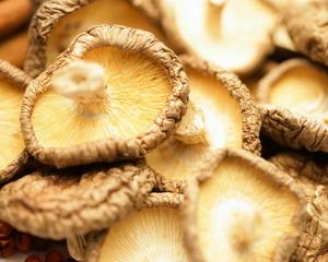 Грибы. Описание, применение в кулинарии, противопоказания, вред и полезные свойства грибов
