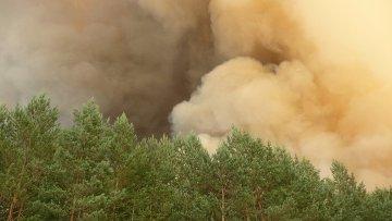 Марийские леса остаются закрытыми