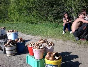 На Урале начался грибной сезон, врачи предупреждают любителей «тихой охоты» об опасности отравлений