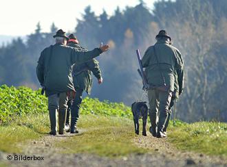 Лесники отбивают охоту собирать грибы