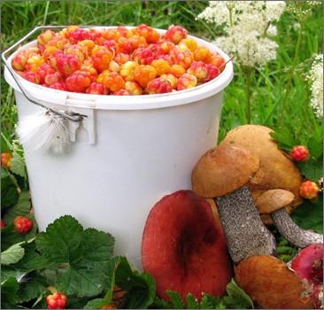 Украина, Херсон: за ягоды, грибы и пикники в лесу придется платить