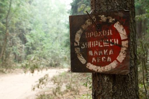 Дело за малым: почему предприниматели не находят дорогу в лес