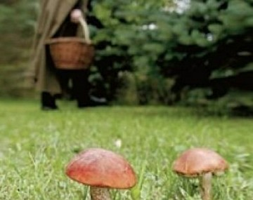 Сбор грибов
