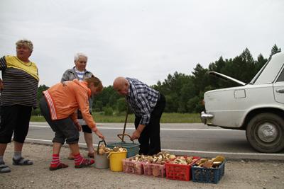 За грибами на автомобильных трассах выстраиваются очереди