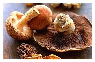 ЕС: Экзотические грибы стали более доступными для широкой публики