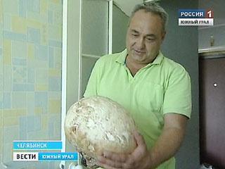 Житель Челябинска нашел пяти килограммовый гриб